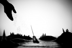 narwhal fantasy photo